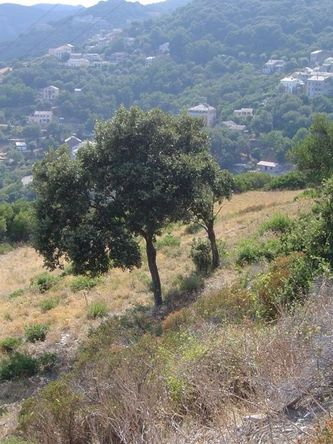 mountain-cap-corse