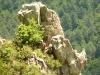 route-ghisoni-corte-fiumorbu